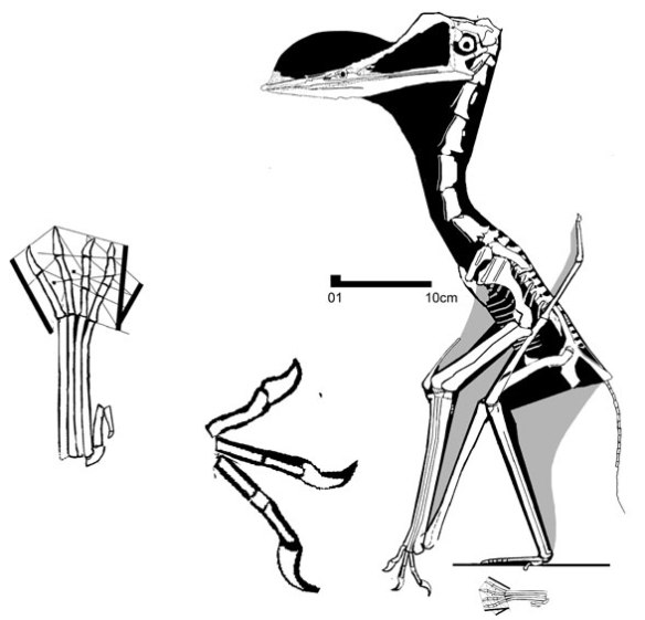 Figure 1. Chaoyangopterus alongside the new China tracks from the early Late Cretaceous.
