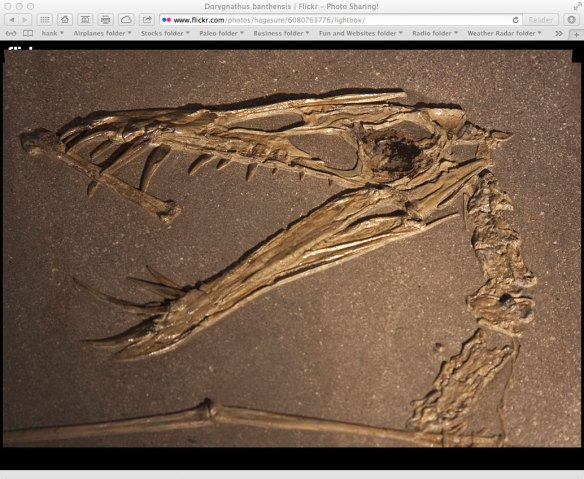 Figure 2. Here is the R156 specimen of Dorygnathus. Can you find the postorbital. pterygoid and squamosal?