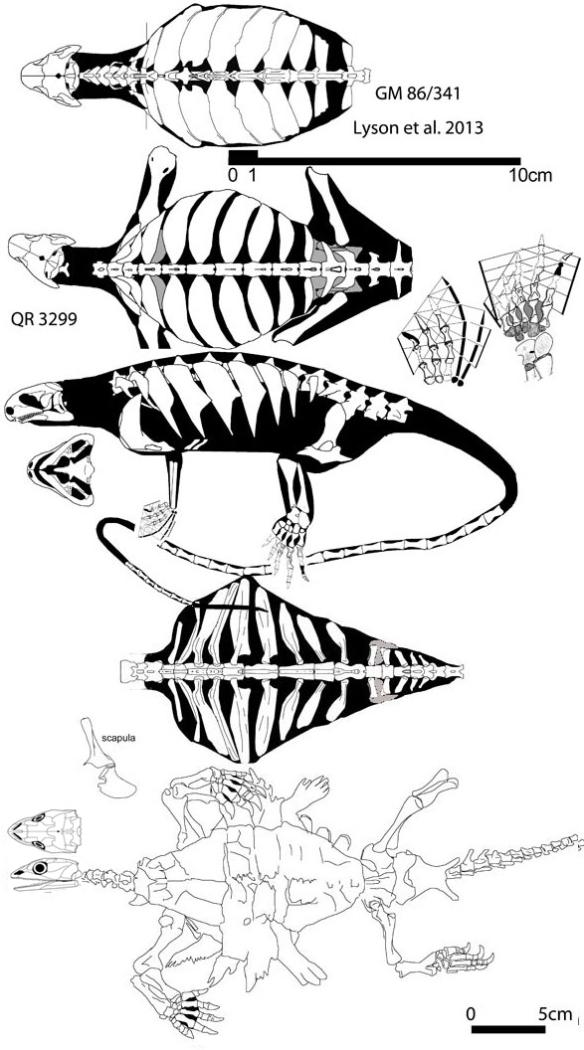 eunotosaurus-odontochelys588