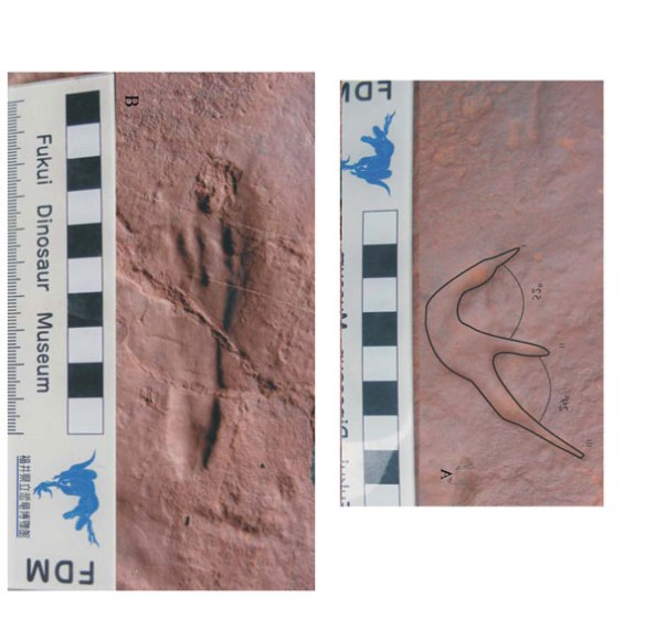 New pterosaur tracks by Chen et al. 2013.
