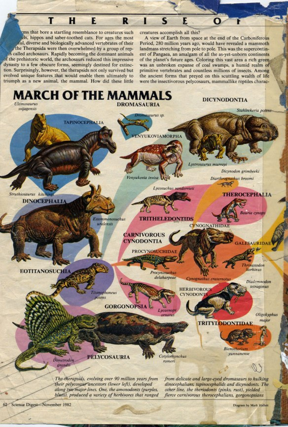 The March of the Mammals (actually the synapsid family tree) as illustrated by Mark Hallett in the November issue of Science Digest, page 62. This image caught my eye and changed my life.