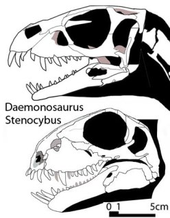 Figure 5. Pioneer herbivores in their clades, both with large procumbent teeth, not unlike Dorygnathus. Daemonosaurus is a dinosaur. Stenocybus is a basal therapsid leaning toward the galesaurid/dicynodont branch.