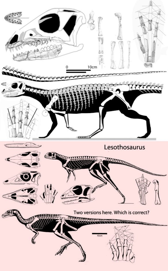 Figure 2. Scutellosaurus and two versions of Lesothosaurus. While more similar in size, these two also nest closer together than either does to Scelidosaurus. Perhaps the armor was convergent.