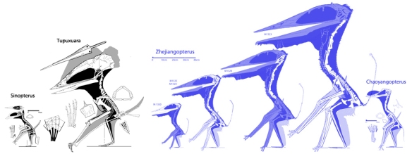 Tapejarids and thalassodromids vs azharchids and chaoyangopterids.