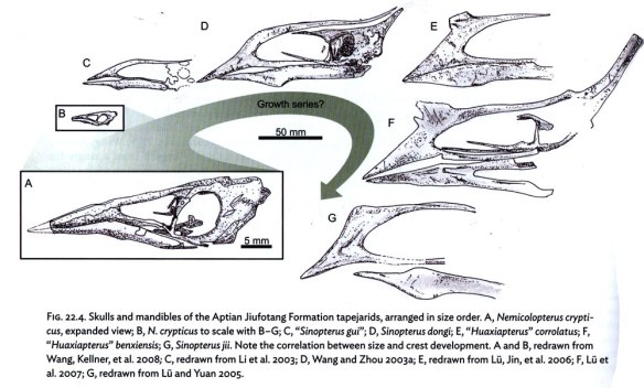 Figure 1. Witton proposes a possible ontogenetic series here, from tiny Nemicolopterus to larger Sinopterus jii. The large reptile tree found this to be a phylogenetic series, with small forms evolving to become larger forms.