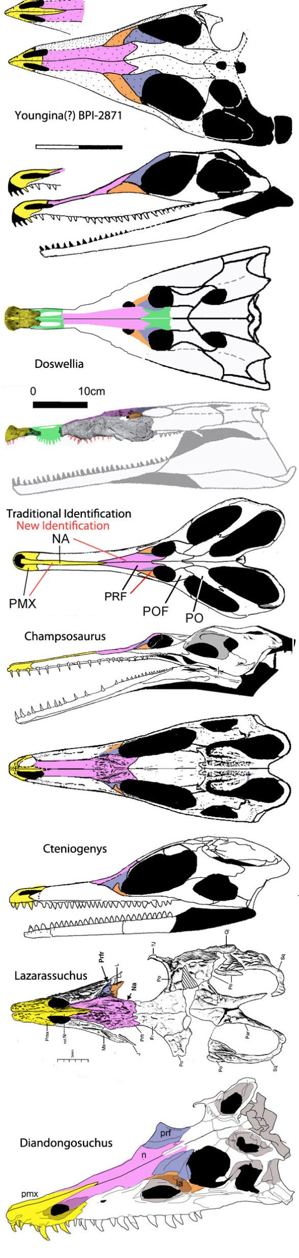 Figure 2. Various choristoderes and their kin with a focus on the bones surrounding the naris and comprising the snout.