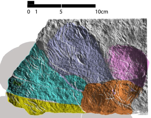 Figure 3. Cynodontipus burrows, likely from a procolophonid. Each color represents a new burrow direction from a central origin.