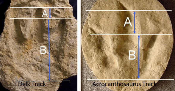Figure 2. Conmparing the alleged theropod track to a genuine theropod track. Poor Creationist artistry is the giveaway.