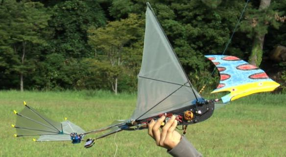 Figure 1. Pterosaur ornithopter. This model flies well and for good reason.