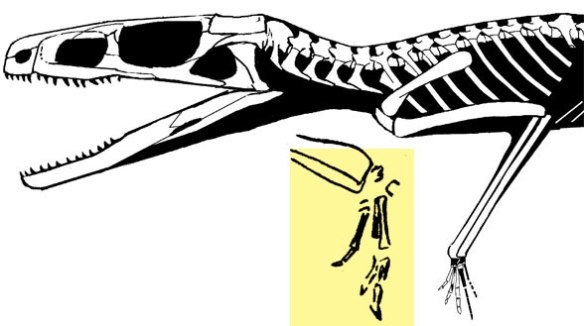 Figure 1. Scleromochlus forequarters. The yellow area shows the hand enlarged in situ. The size of the Scleromochlus hand makes it the last possible sister to pterosaurs, famous for their very large hands.
