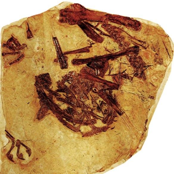 Figure 1. Batrachognathus in situ.