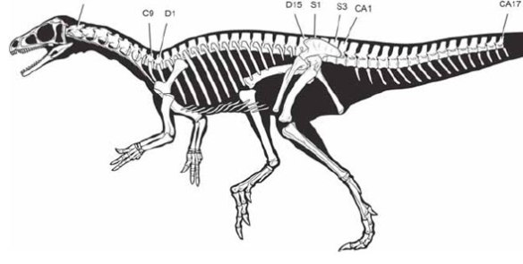 Figure 1. Eoraptor as illustrated by Carol Abraczinskas for Sereno et al. 2013.