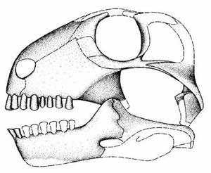 Figure 2. The original reconstruction by Modesto et al.  1999.