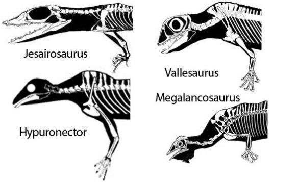 Figure 2. Drepanosaur pectoral girdles