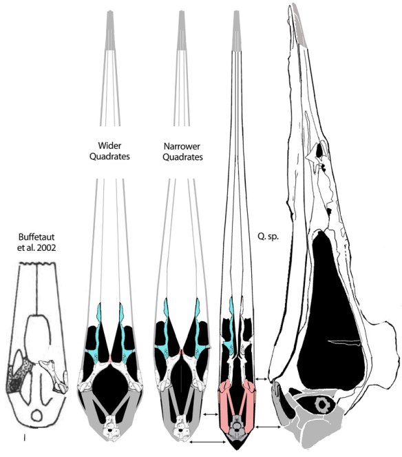 Figure 3. Click to enlarge. Hatzegopteryx palate elements added to Quetzalcoatlus species elements and vice versa. The basipterygoids have not been documented in azhdarchids or sister taxa, but appear to be paired rather than single, as Buffetaut et al. proposed.