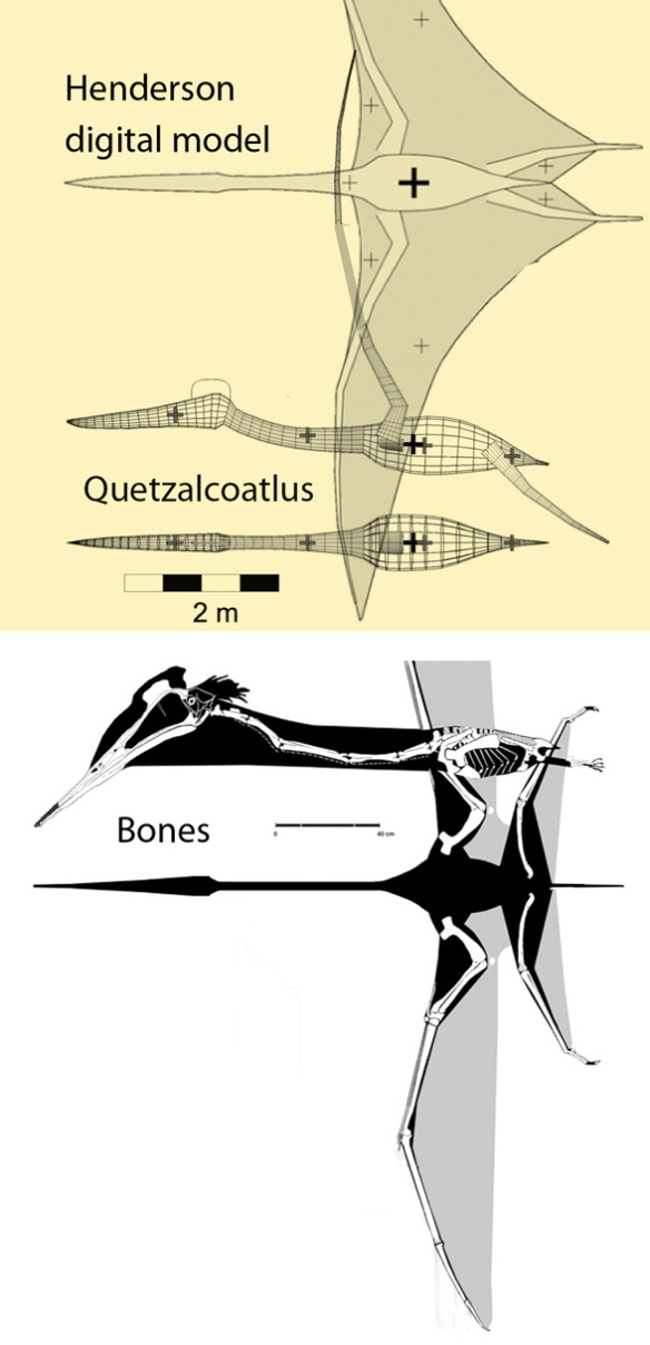 Figure 2. Quetzalcoatlus recreated as a digital model by Henderson 2010 compared to a bone reconstruction. No wonder the results were odd. The math was wrong.
