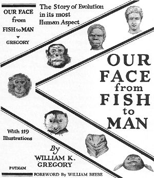 Figure 2. Our Face from Fish to Man by WK Gregory 1929.