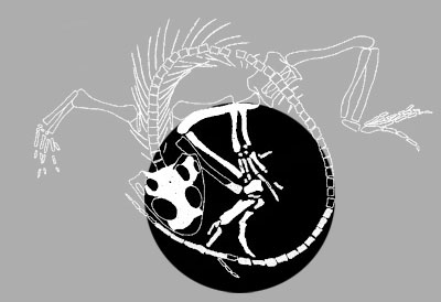 Figure 1. Perhaps the most complete vertebrate fossil taken from a borehole, Polysphenodon, a rhynchocephalian from the Triassic discovered at 775m below the surface. From Jaekel 1911, Fraser and Benton 1989