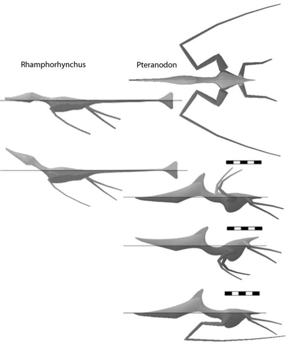 Computational models of two pterosaurs from Hone and Henderson 2013. Note how both have trouble keeping their nose out of the water. Henderson's models have shown their limitations in earlier papers.