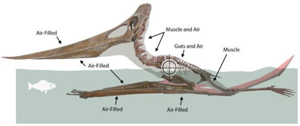 Figure 3. Triebold Pteranodon in  floating configuration. Center of balance marked by cross-hairs.