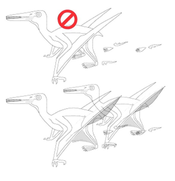 Figure 5. Above, standing/walking pterosaur traced from Wellnhofer 1991 by Veldmeijer et al. . Below, problems are illuminated. If you're going to have deep chord wing membranes, then you can't switch back to narrow chord ones when you want to. Rather, if you're going to be true to a configuration, then let the membranes droop when they're not pulled taut by the hind limbs.