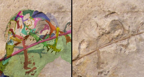 Figure 5. Click to enlarge. Anurognathus holotype with bones identified. Here the sclerotic ring is not so clear, but the jugal is. And the jugal carries the sclerotic ring.