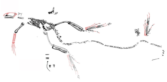 Figure 3. Click to enlarge. Moving the bones of Bavarisaurus into a reasonable reconstruction is step 2.