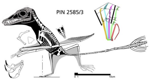 Figure 1. Sordes holotype 2785/3. The skull is perhaps present, but so degraded it must be considered unknown.