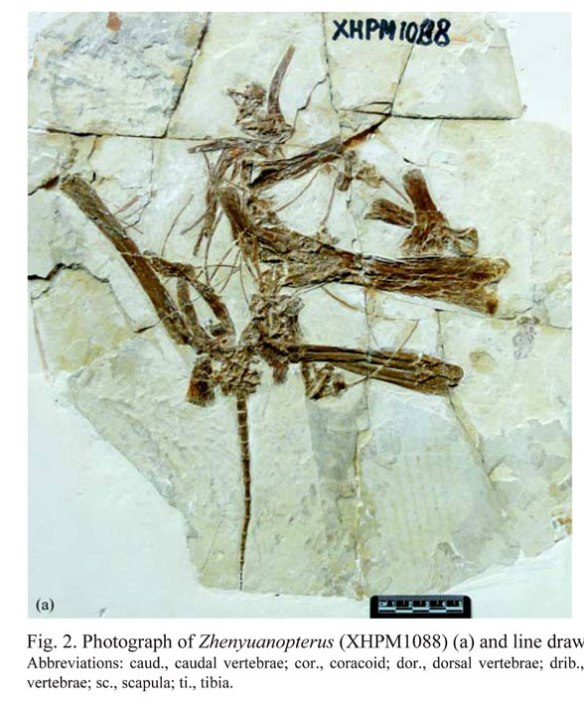 Figure 1. XHPM1088 in situ. Only the posterior half is preserved here.