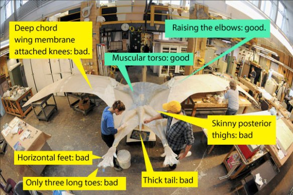 Figure 2. Basic errors in the big Quetzalcoatlus model.