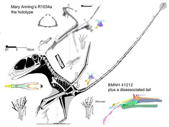 Dimorphodon588