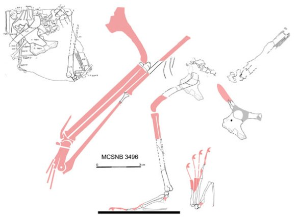 MCSNB 3496 in situ and reconstructed from the very few parts here.