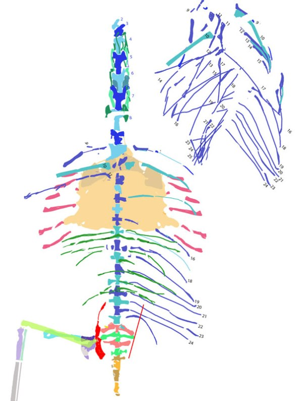 Figure 2. The colorized bones on a fresh canvas.