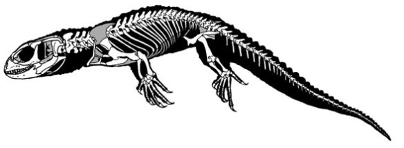 Figure 2. Shinisaurus, a taxon Kequin and Norell recovered as a sister to Carusia.