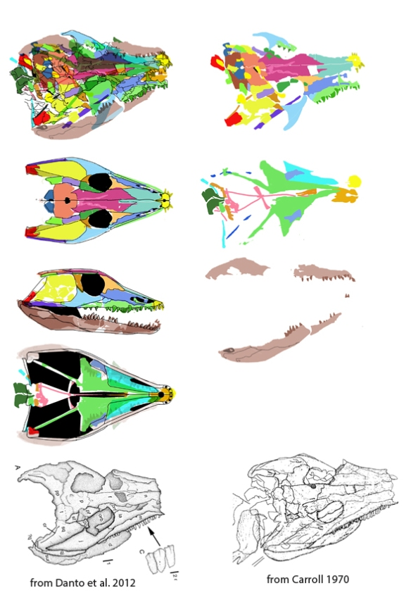 Figure 1. Solenodonsaurus interpreted using DGS. That's a 13 cm skull