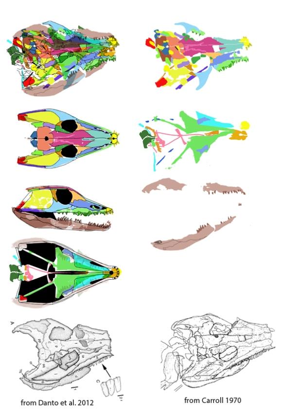 Figure 1. Solenodonsaurus interpreted using DGS. That's a 13 cm skull