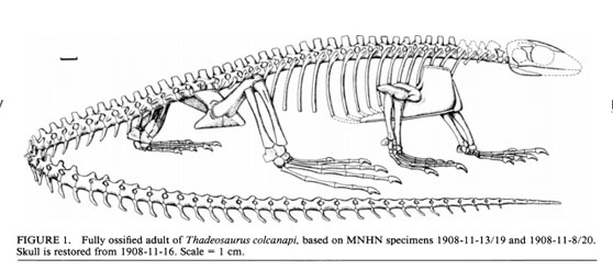 Figure 1. Original reconstruction of Thadeosaurus from Carroll 1981, 1993.