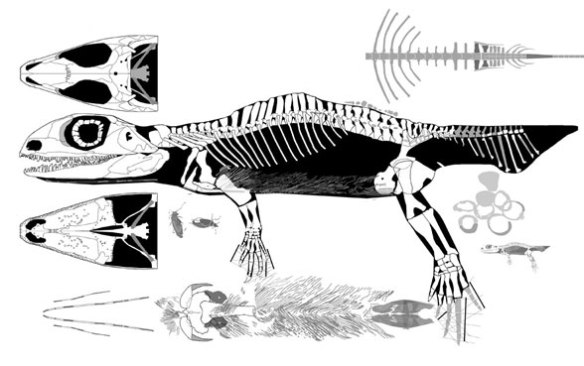 Figure 3. Reconstruction of G. watsoni as a distinctly different genus, nesting with Eldeceeon rather than G. bohemicus.