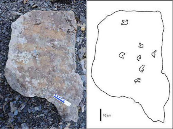 Figure 1. Pterosaur tracks from Alaska. Note the lack of pedal tracks and the large size of the manus tracks.