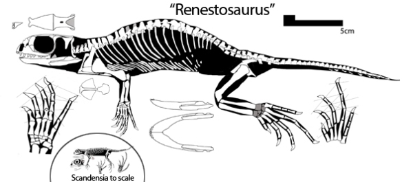 Figure 4. Langobardisaurus? rossii compared to tiny Scandensia.