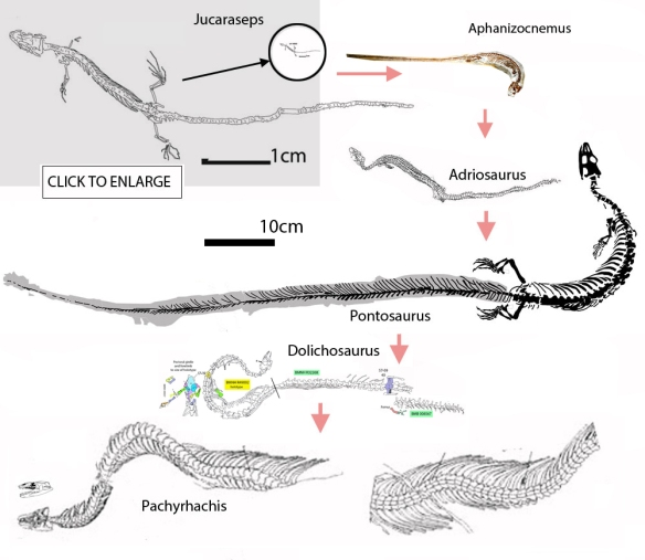 Figure 1. Dolichosaurus added to the lineage of snake origins.