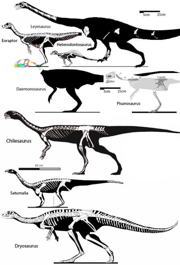 Figure 1. Chilesaurus and kin, including Damonosaurus and basal phytodinosauria.