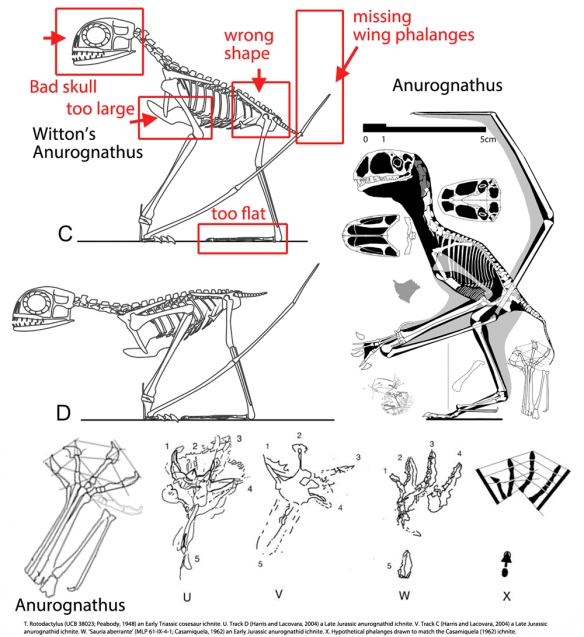 Figure 1. Anurognathus  by Witton along with an Anurognathus pes and various anurognathid ichnites.