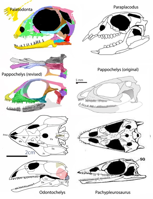 Figure 1. Pappochelys skull compared to sister taxa including Palatodonta and the original reconstruction of Schoch and Sues.