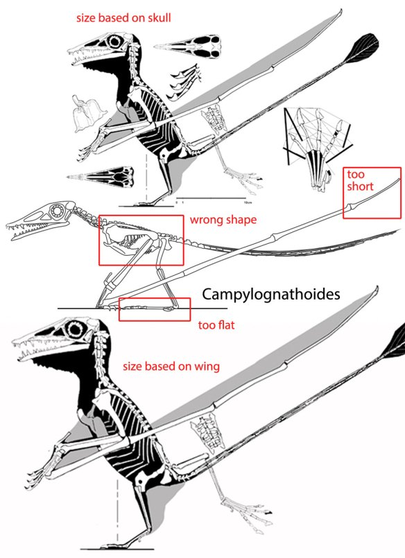 Figure 6. Quadrupedal Campylognathoides by Witton (center) with errors noted and compared to bipedal alternatives.
