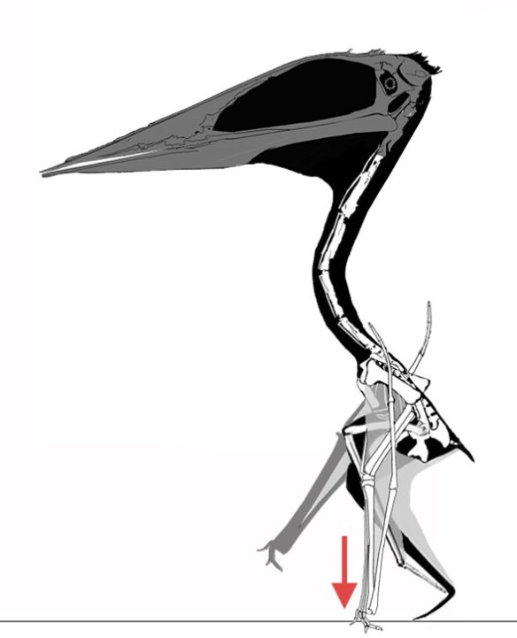 azhdarchid | The Pterosaur Heresies