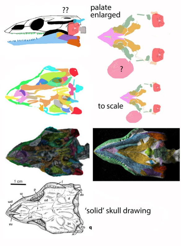 Figure 7. Data and tentative interpretations of skull elements for Odontochelys. I can't make more sense than this of the bones. Sorry. Gray areas appear to represent holes in the cranium.
