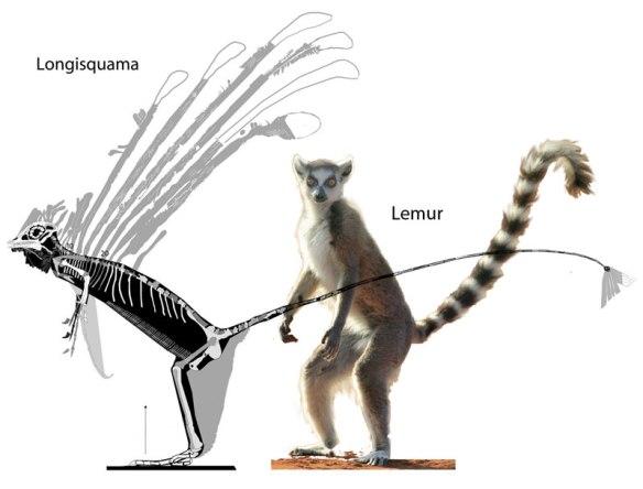 Figure 1. Longisquama (Triassic fenestrasaur) compared to a modern Lemur. Similar body shapes might imply similar locomotory patterns.