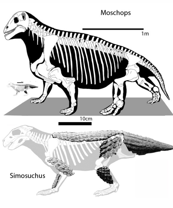 Figure 1. Moschops (above) was a 2.7m long herbivorous therapsid. Simosuchus was a 75cm long herbivorous crocodylomorph.