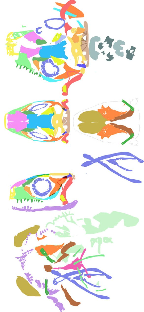 Figure 2. Skull elements of Xianglong reconstructed in several views. Some soft tissue is also shown (light green). Elements pulled from figure 1. If you find any errors here, please call them to my attention.
